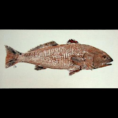 Ilcm international life cast museum big red redfish for Big fish printing